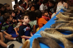 -- 9/10/09 - Allison Diaz / For the Miami Herald -- Students at the Academy in Kendall learn how to make a Shafor from Rabbi Yossi Harlig which are used to remind people of the coming and arrival of the Jewish holiday Rosh Hashanah. Pictured, Michael Fields, 4, looks at the horns before he and his classmates turn them into Shafors. (Kendall, 4 of 8)